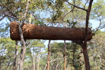 Bark Hive.JPG