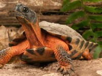 reptile-learning.jpg