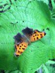QuestionMark_Butterfly.jpg