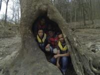 The Hollow Tree.jpg