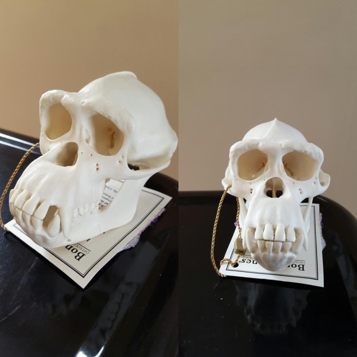 chimpskulls.jpg