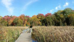 marsh fall 1.jpg