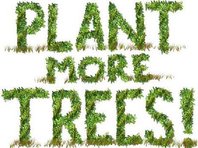 plant-more-trees.jpg