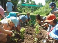school-gardening.jpg
