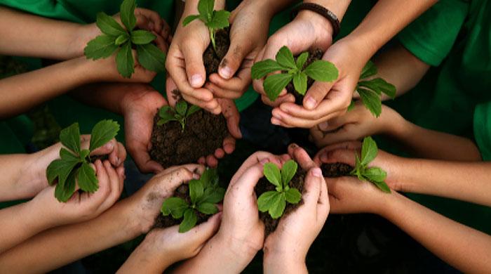 teaching-kids-ecology-1.jpg